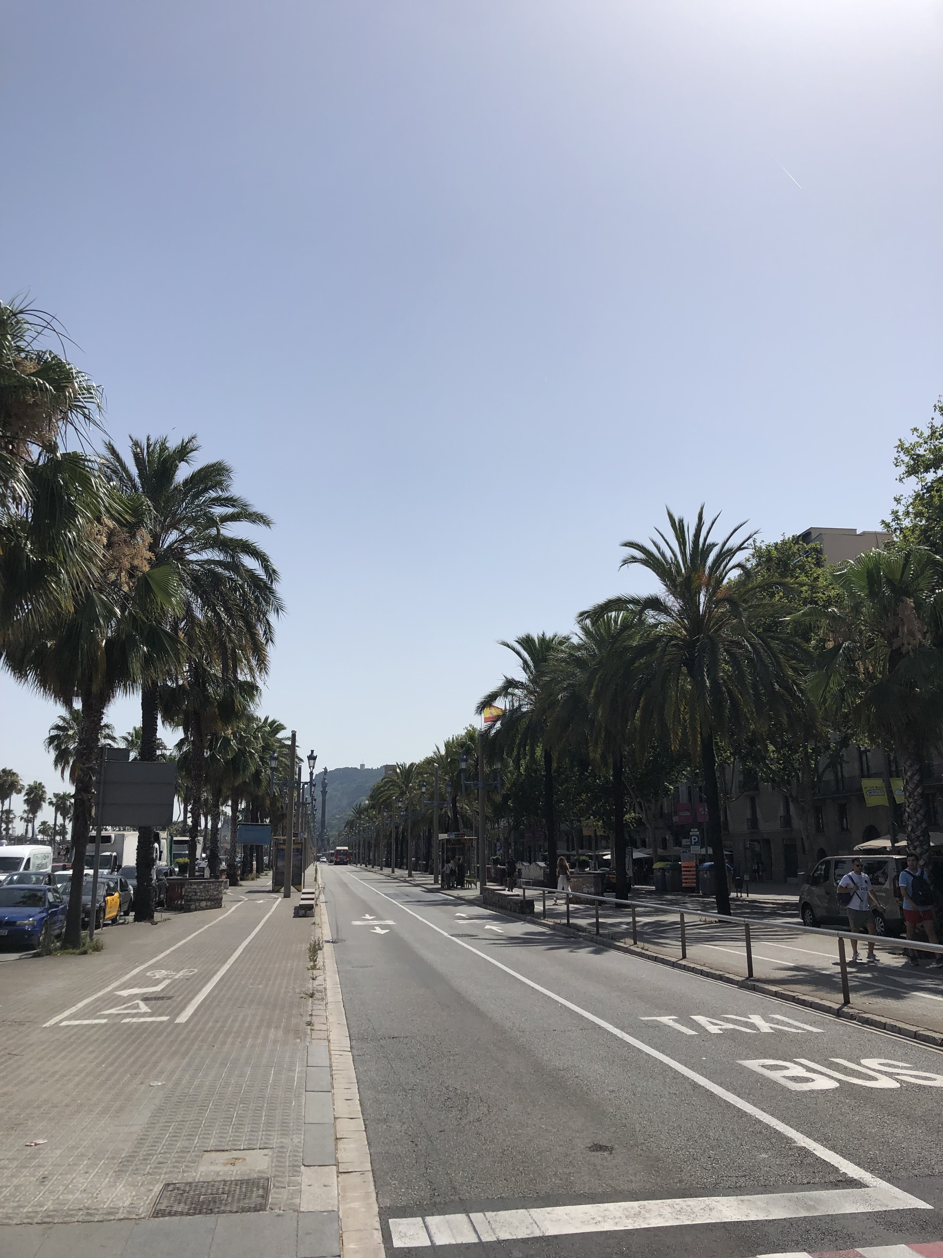 Street in Barcelona lined with palm trees